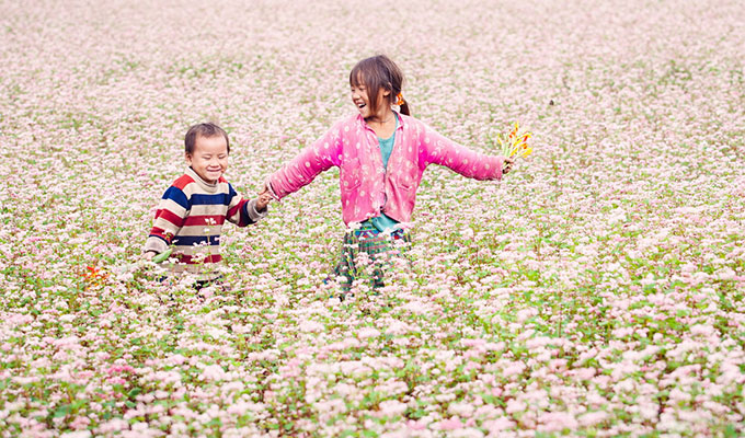 Buckwheat flower exhibition in Ha Noi