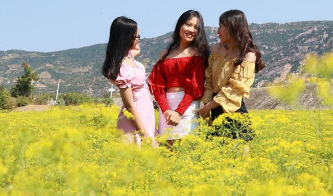 Hấp dẫn với cánh đồng hoa Thì Là ở vùng đất hạn Ninh Thuận