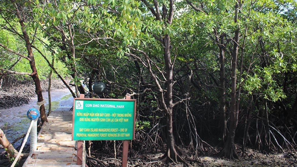 Bà Rịa - Vũng Tàu: Cho thuê hơn 888ha rừng để phát triển du lịch sinh thái