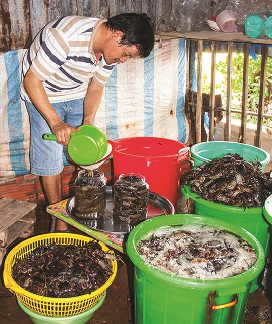 Ca Mau's traditional sauce making recognised as national cultural heritage