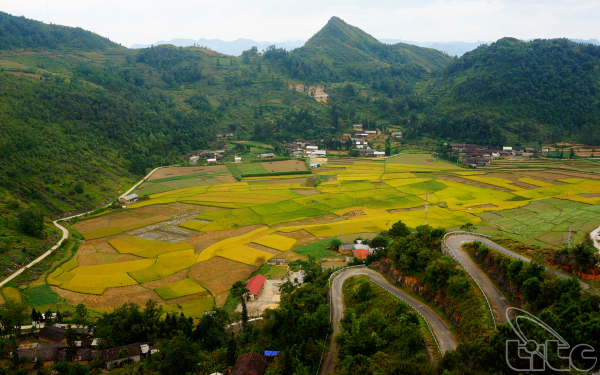 The golden rice field seen from Lung Cu Flag Tower