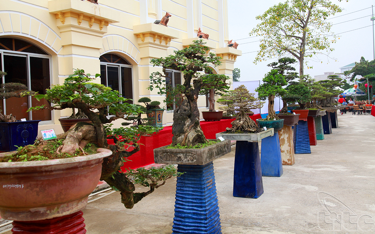 The bonsai and ornamental plants area in the museum